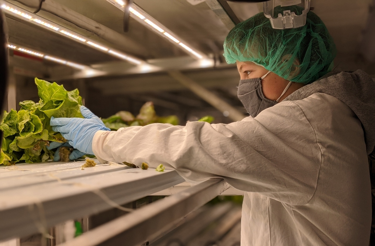 Close-up profile of student reach for head of lettuce on shelf